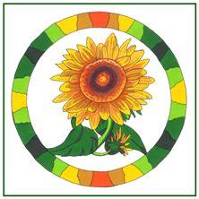 Shire Sunflower